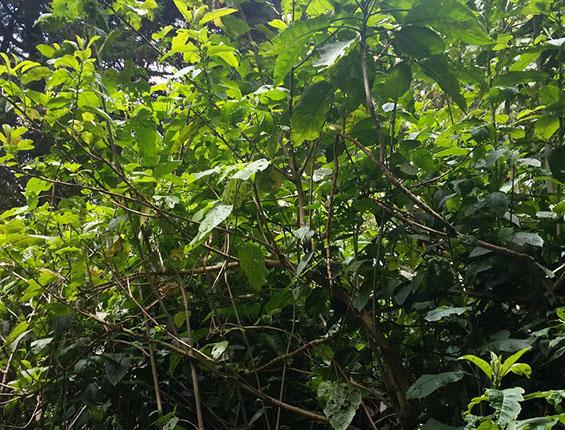 hg - 20150610_114802-crop-u8410